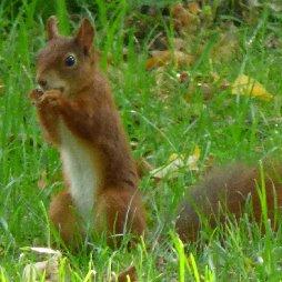 pension-oberpfalz-natur-tiere-eichhörnchen
